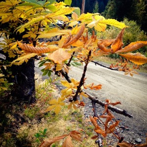 Happy Autumn: turn over a new leaf