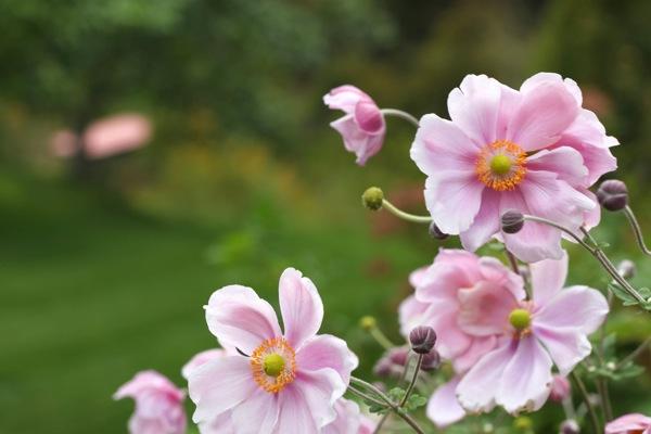 Flowers  1 of 1 10