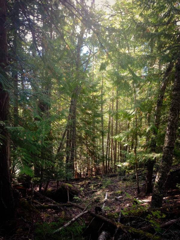 hiking (1 of 1)-4