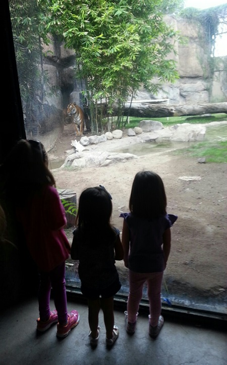 cousins-at-the-zoo.JPG