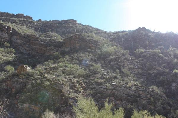 sabino-canyon.jpg