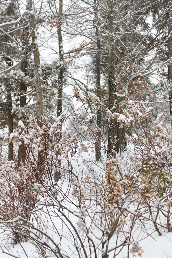 Snow  1 of 1