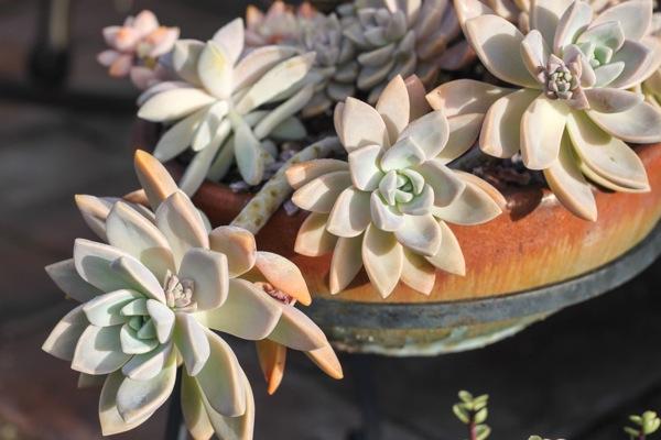 Succulents  1 of 1 4