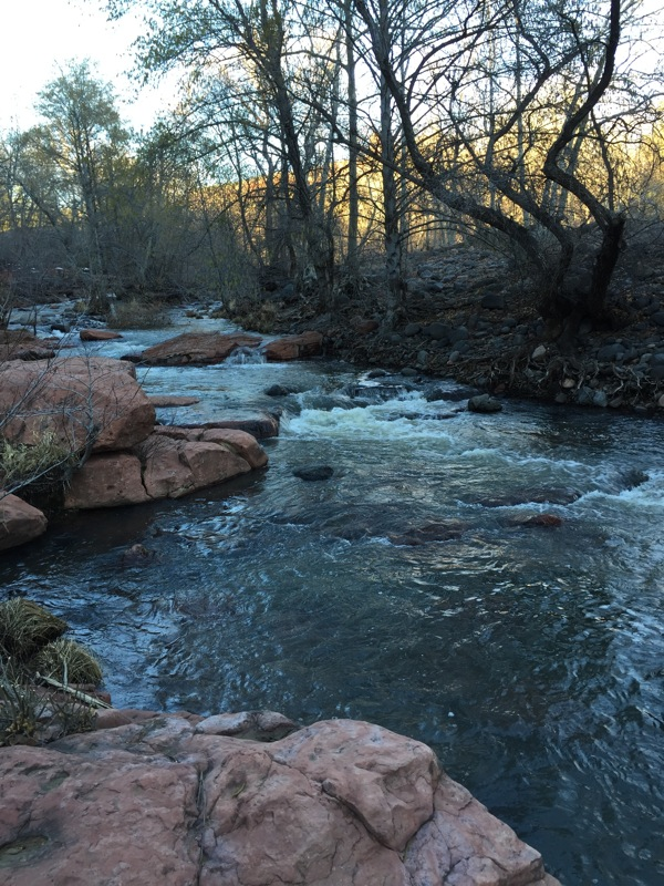 forest bathing near Oak Creek Sedona