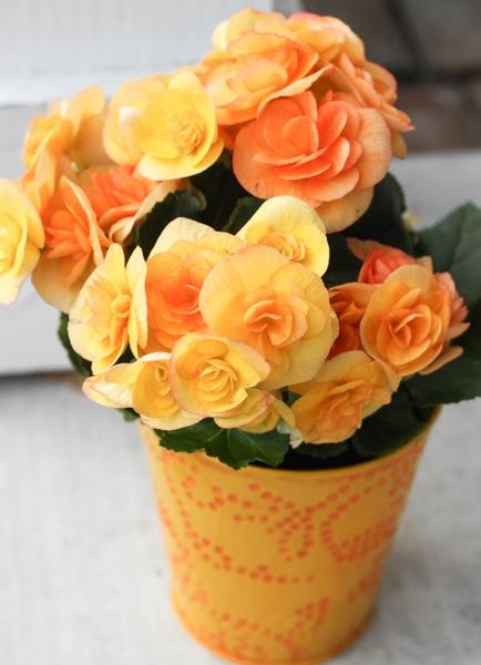 Flowers  1 of 1 13
