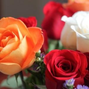 roses (1 of 1)-4.jpg