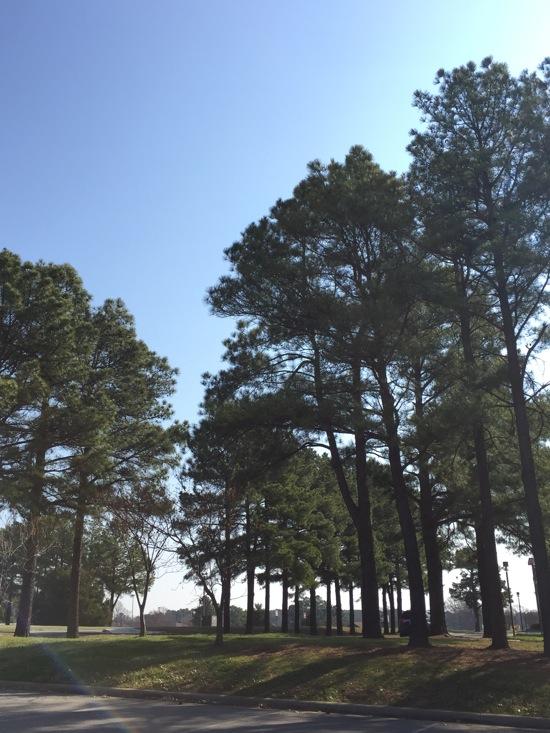 Gorg trees