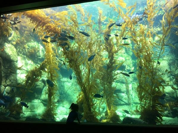 Liv and aquarium