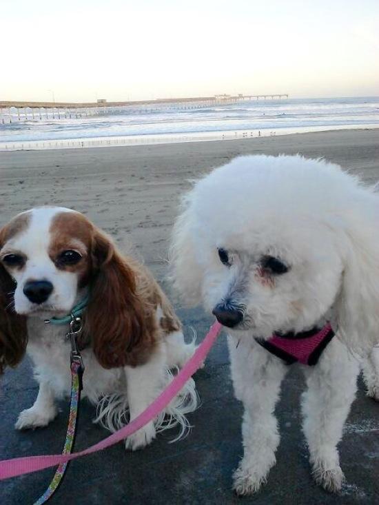 Beachin dogs