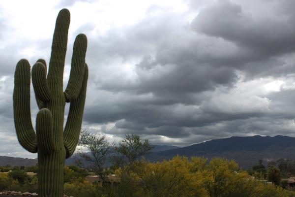 Saguaro  1 of 1