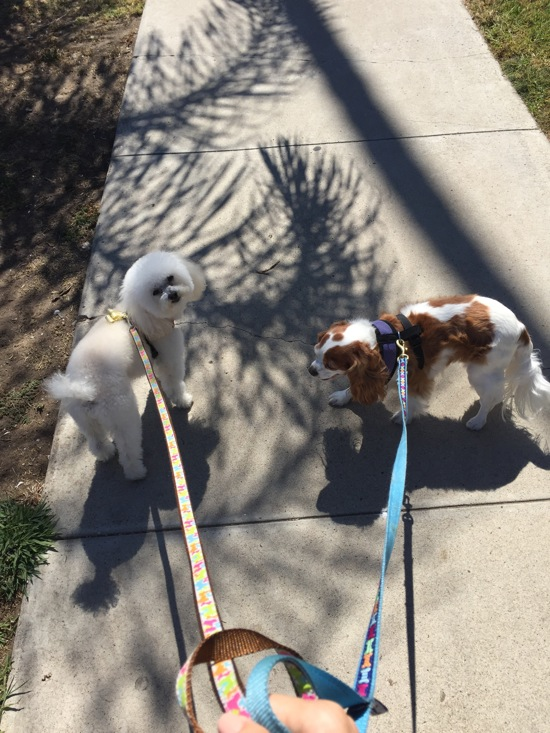 Walking the nuggets