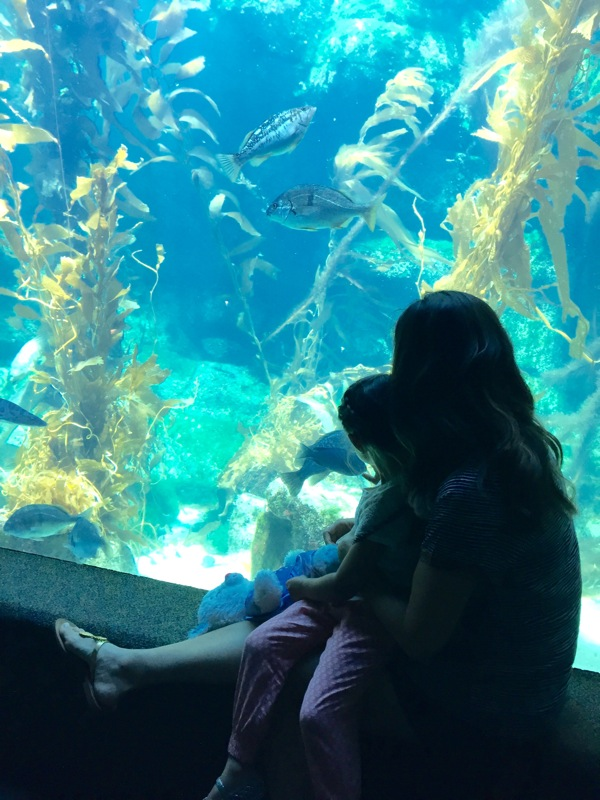 Aquarium with liv
