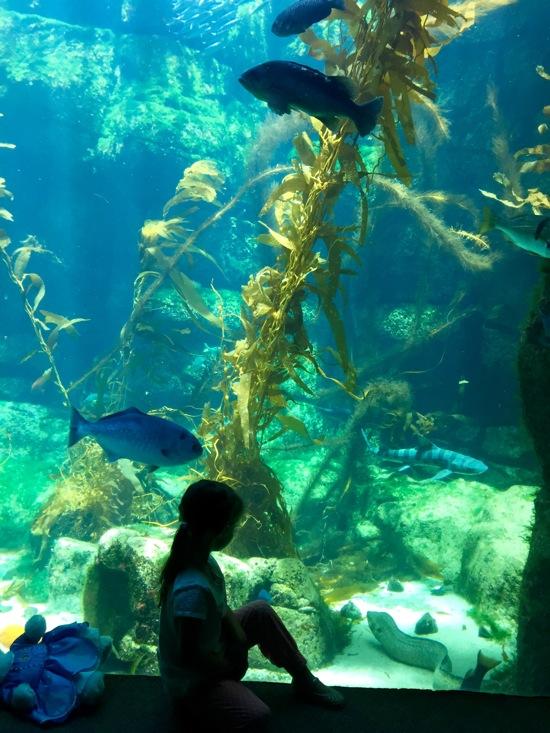 Liv at aquarium