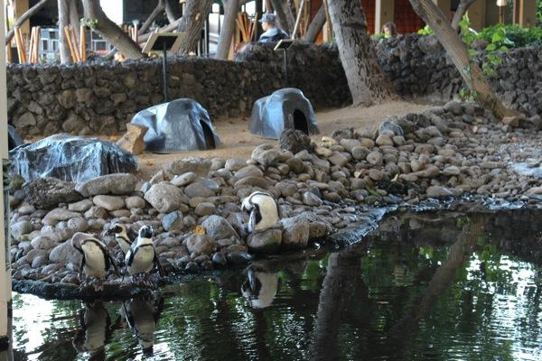 Penguins  1 of 1