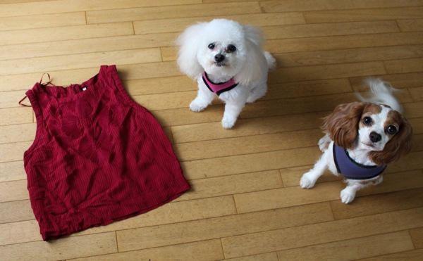 Dogs and crop top 1 of 1