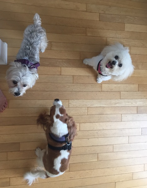 Dog beggars