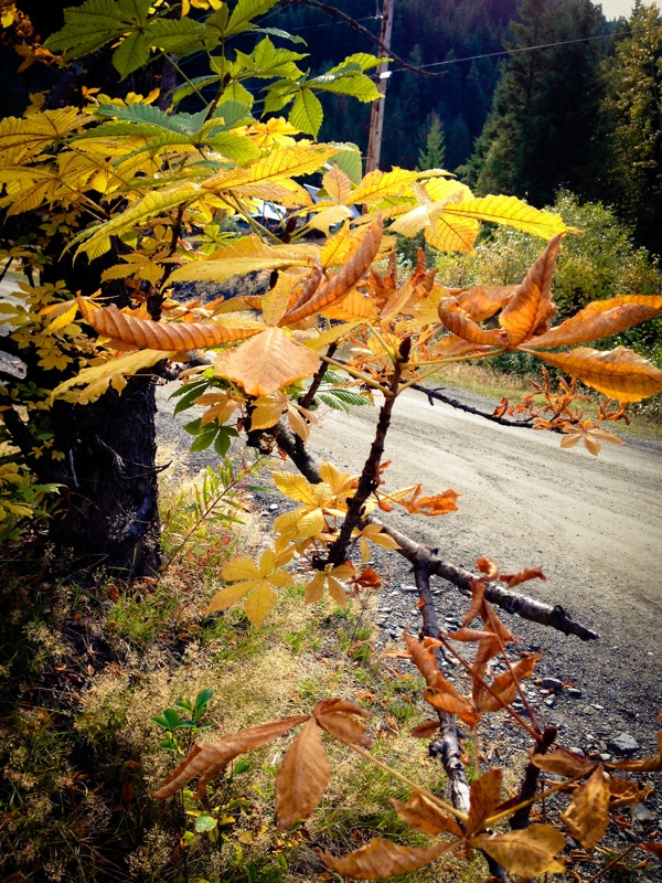 Fall leaves 1 of 1 2