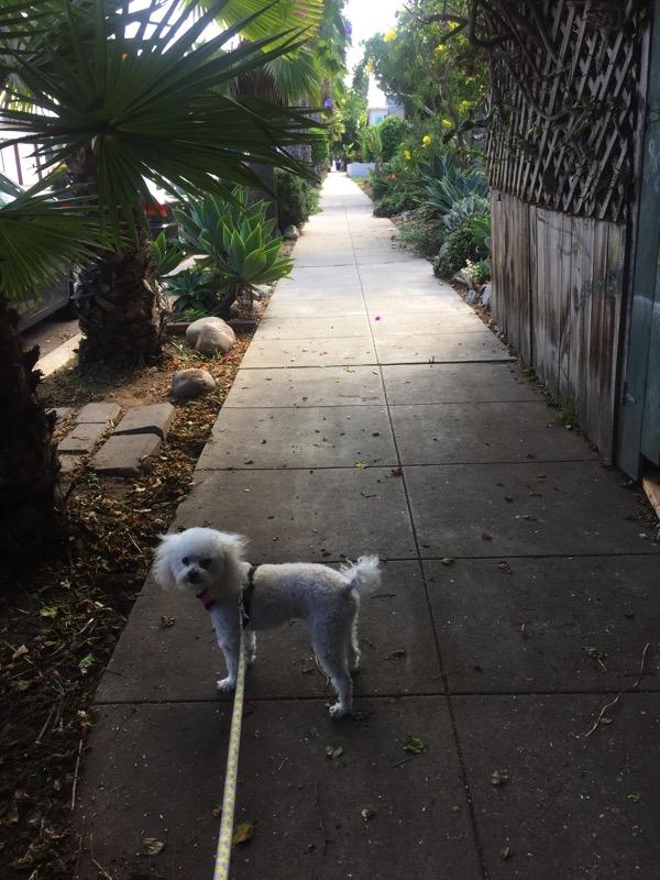 Bella on a walk