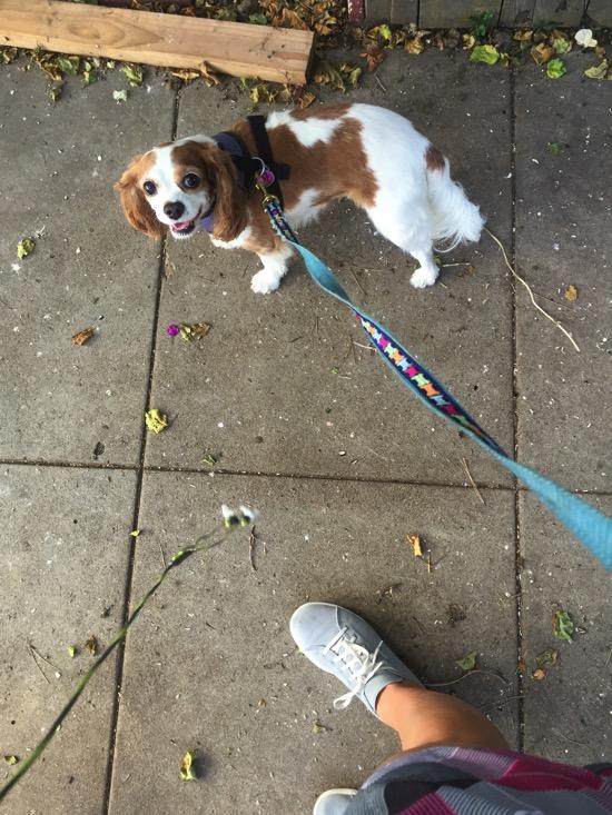 Caro on a walk