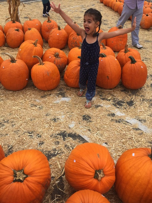 Liv at pumpkin station