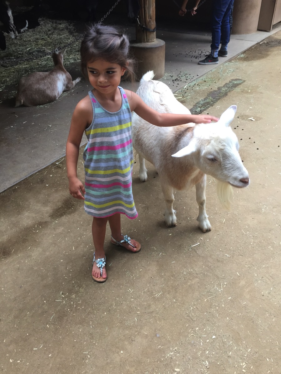 Livi and the goats