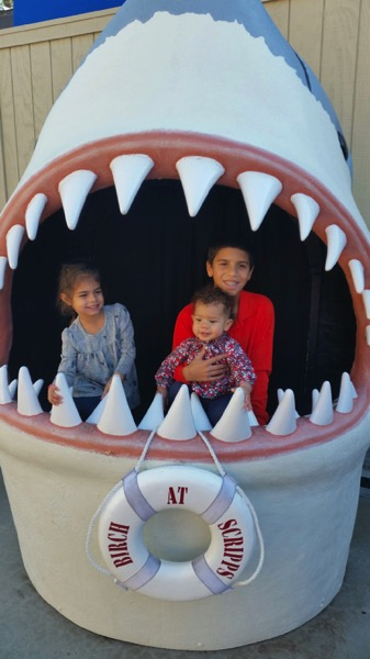 Cousins in the shark's mouth