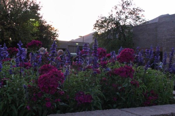 Flowers 5