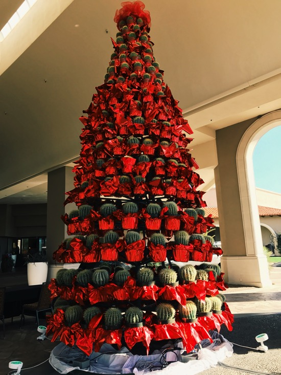 Cactus tree at the Westin