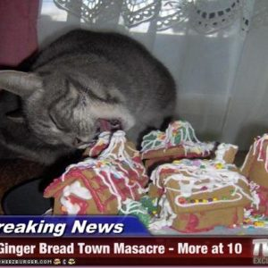 funny-pictures-cat-eats-gingerbread