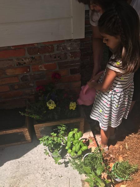 Gardening w liv