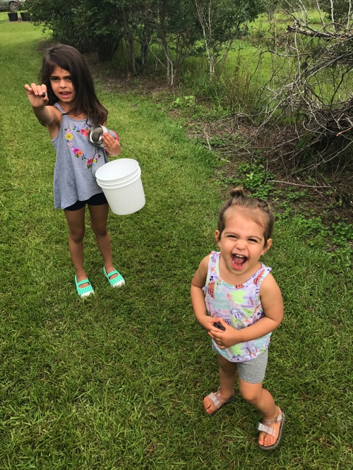 The girls blueberry picking