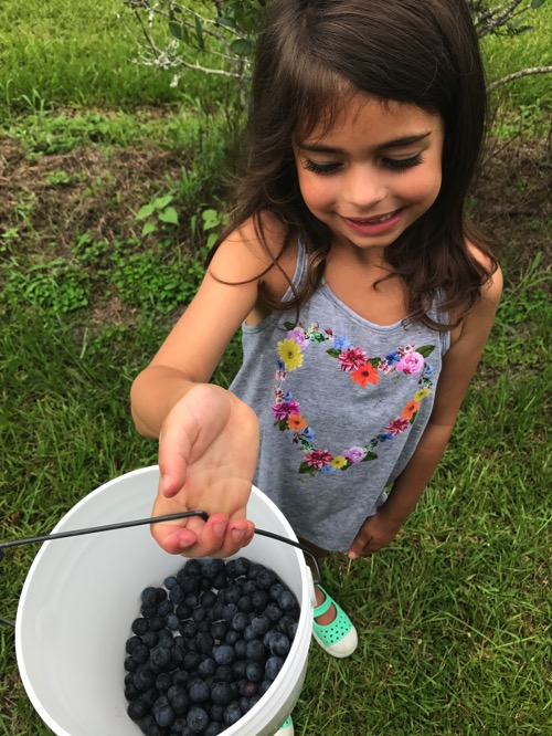 Live and her blueberries