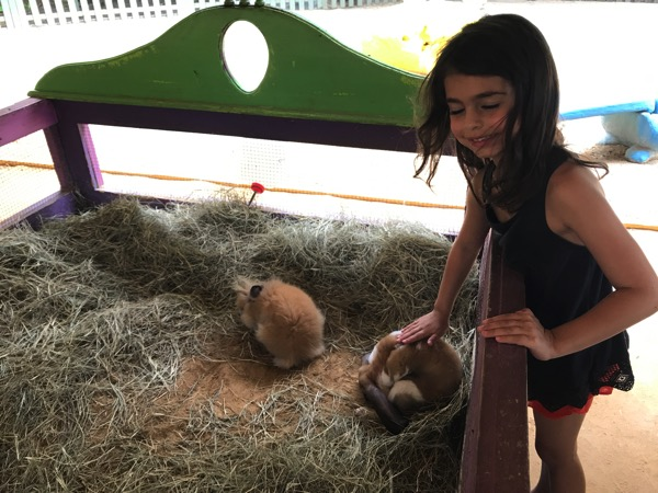 Livi at the petting zoo