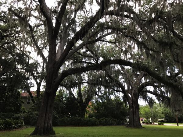 Weepy tree