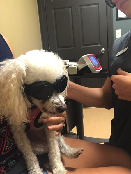 Bella laser therapy