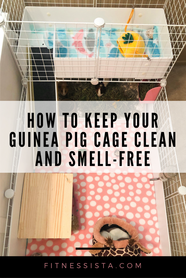 Tips on keeping your guinea pig cage clean and smell-free, plus how to use fleece bedding and set up a guinea pig cage. fitnessista.com