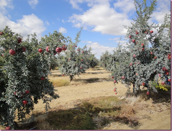 pom orchards