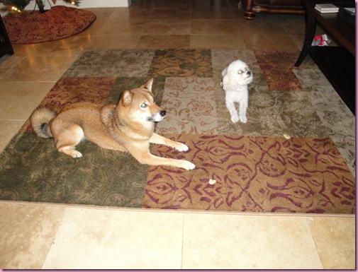 puppieswtreats
