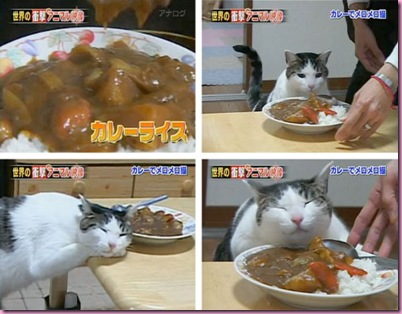 20100419-currycat