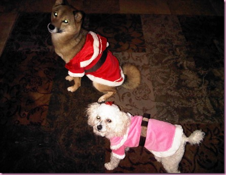 dogs in santa outfits