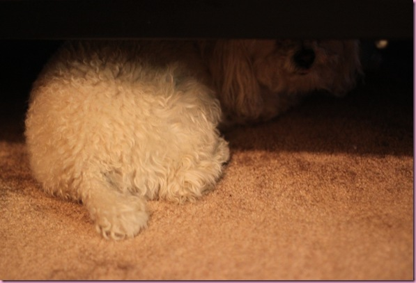 bell hiding under the bed