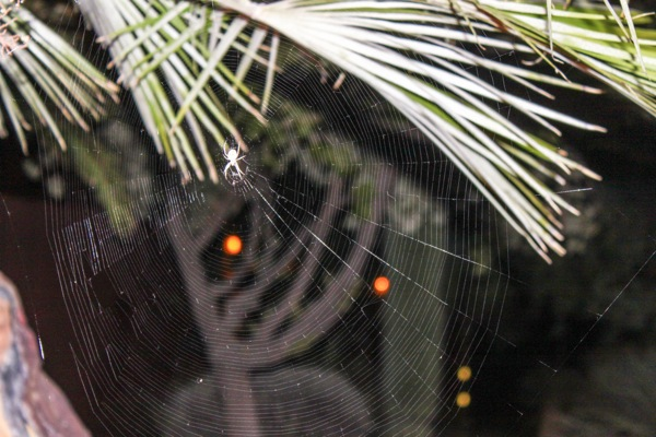 walking into spiderwebs essay Great collection of paper writing guides and free samples ask our experts to get writing help submit your essay for analysis.